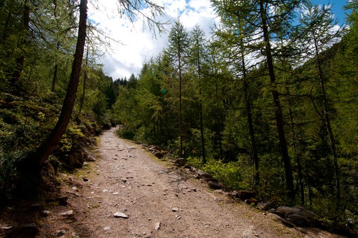 Aggiunti nel sito nuovi scatti di Pejo  e parco nazionale dello Stelvio  (1/6)
