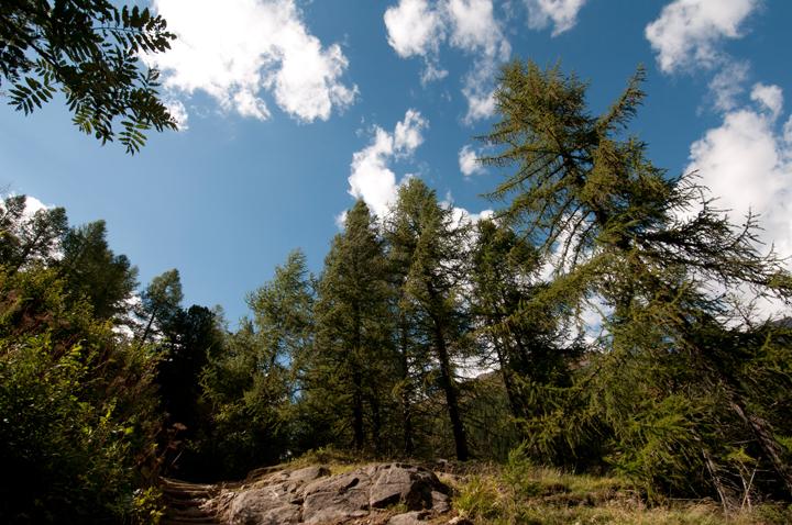 Aggiunti nel sito nuovi scatti di Pejo  e parco nazionale dello Stelvio  (2/6)