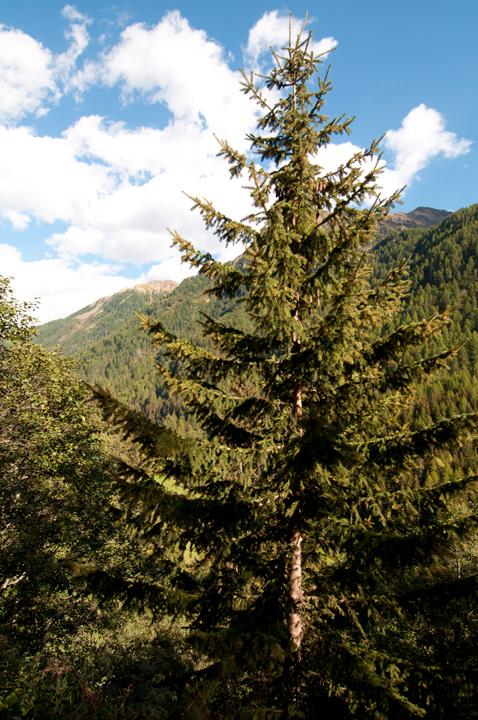 Aggiunti nel sito nuovi scatti di Pejo  e parco nazionale dello Stelvio  (4/6)