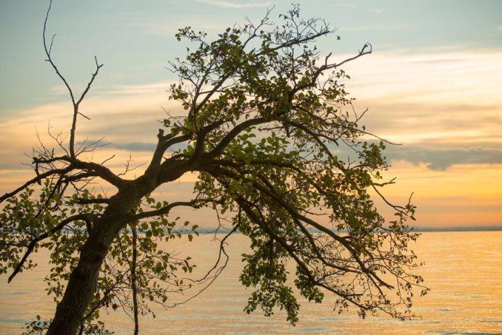 Albero solitario sul lago di Garda