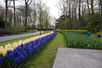 Keukenhof , Netherlands