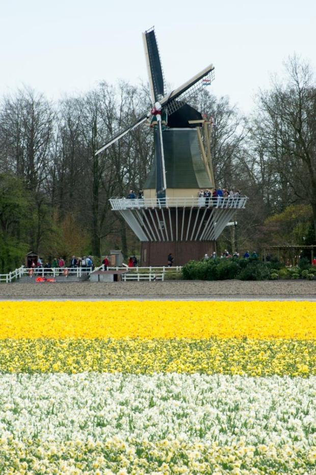 Netherland, a windmill